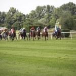 at yarışı — Stok fotoğraf