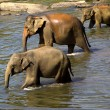 Elephant bathing — Stockfoto #37677663