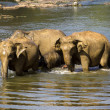 Elephant bathing — Stock fotografie #37677673