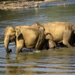 Elephant bathing — Stockfoto #37677717