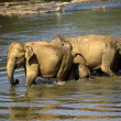 Elephant bathing — Foto Stock #37677717