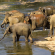 Elephant bathing — Stockfoto #37677731