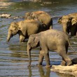 Elephant bathing — Stockfoto #37677733