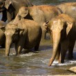 Stock Photo: Elephant bathing