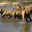 Elephant bathing — Stockfoto #37677969