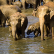 Elephant bathing — Stockfoto #37678671