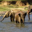 Photo: Elephant bathing