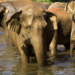 Elephant bathing — Stockfoto #37678689