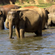 Elephant bathing — Stockfoto #37678697