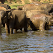 Elephant bathing — Stock fotografie #37679369