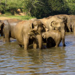 Elephant bathing — Stockfoto #37679373