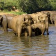 Elephant bathing — Stock Photo #37679373