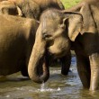 Elephant bathing — Stockfoto #37679381