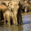 Elephant bathing — Stockfoto #37679393