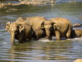 大象沐浴 — 图库照片