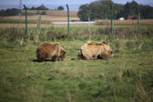 Two brown bears — Stock Photo