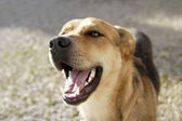 Laughing Shepherd — Stock Photo