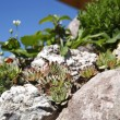 Stock fotografie: Mountain plants