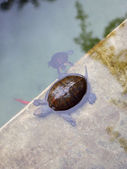 Turtles at the Jardin Majorelle — 图库照片