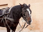 Portrait of a brown horse with cart — Stock Photo