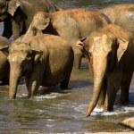 Elephant bathing at the orphanage — Stock Photo #44218743