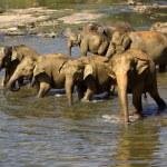 Elephant bathing at the orphanage — Stock Photo #44218759