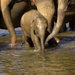 Elephant bathing at the orphanage — Stock Photo #44219253