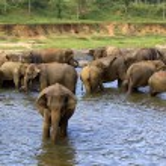 Elephant bathing at the orphanage — Stock Photo #44221469