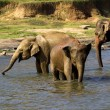 Elephant bathing at the orphanage — Stock Photo