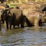 Elephant bathing at the orphanage — Stock Photo #44229881