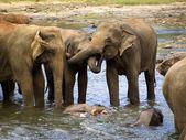 Slon koupání v sirotčinci — Stock fotografie