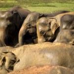 Elephant bathing at the orphanage — Stock Photo #44232839
