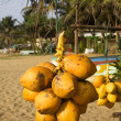 Coconuts hanging on a stand at the beach — Stock Photo