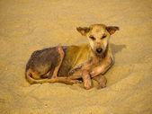Stray dog at the beach — Stock Photo