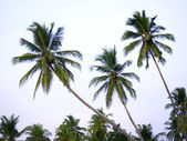 Palms at the beach — Stock Photo