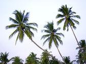 Palms at the beach — Stock Photo