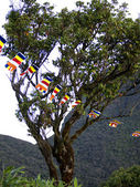 Buddhistic flags at a tree — Stock fotografie