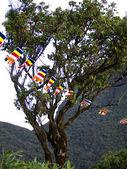 Buddhistic flags at a tree — Zdjęcie stockowe