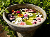 Beautiful colored flowers in a flowerpot — Stock Photo