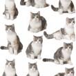 Cats — Stock Photo