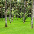 Stock Photo: Meadow with green grass and palm trees