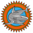Vector shark — Stock Vector