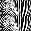 Zebra pattern — Stock Vector