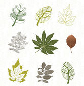 Collection of color vector leafs — Stock Vector