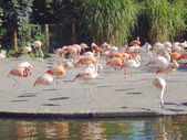 Flamingos in the zoo — 图库照片