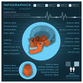 Skull Infographic Infocharts Health And Medical — Stock Vector