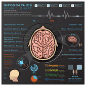 Brain And Nervous System Medical Infographic Infochart  — Stock Vector