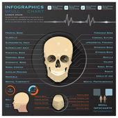 Skull Human Head Medical Infographic Infochart — Stock Vector