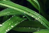 Close-up of the water droplet on plant — Foto Stock