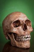 Weathered human skull — Stock Photo